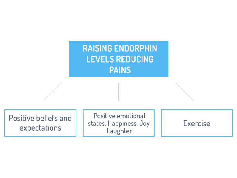 The role of the Endorphins